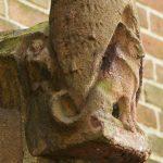 vos zittend voor cypres - foto: loek van vlerken